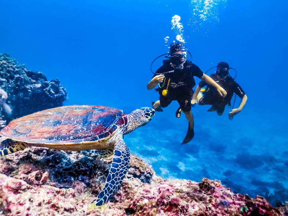 2 divers who have spotted a sea turtle